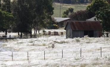 Una lluvia de arañas causó terror en un pueblo de Australia