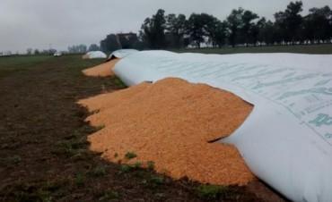 Denuncian la rotura de unos 50 silos bolsa en la zona de Leones