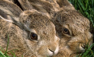 Multaron por $200 mil a un cazador de especies en vías de extinción en San Luis