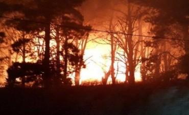 Un voraz incendio afectó a una reserva en Mar del Plata
