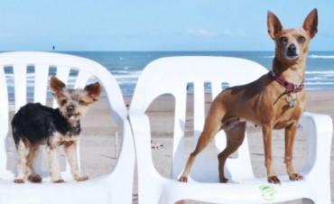 Cómo es el primer balneario para perros de la Argentina