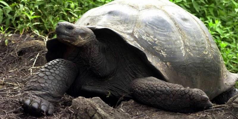 Nacieron tortugas en las Islas Galápagos luego de un siglo