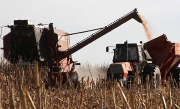 Mejoran las previsiones de cosecha de soja y maíz en Córdoba
