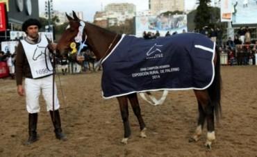 Yegua de Nalbandian, campeona en la Rural