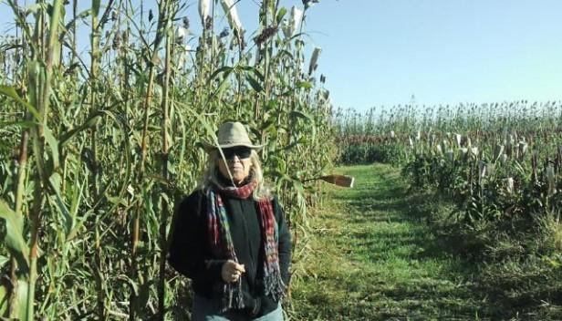 El sorgo gana en altura para la producción de etanol y biogás