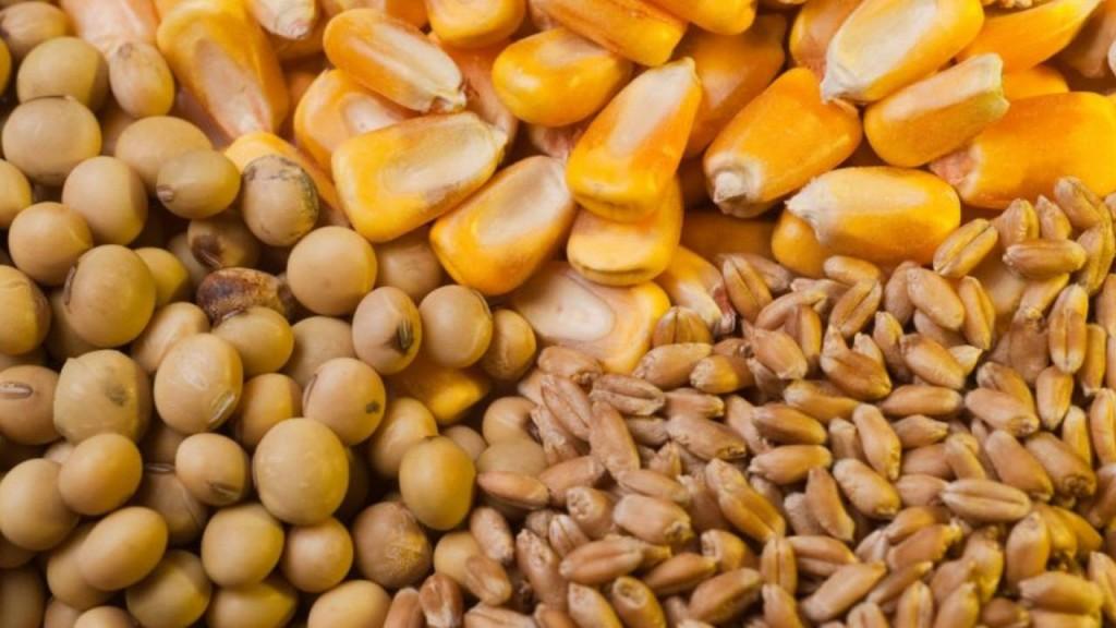 Datos de la campaña récord del trigo, la soja y el maíz
