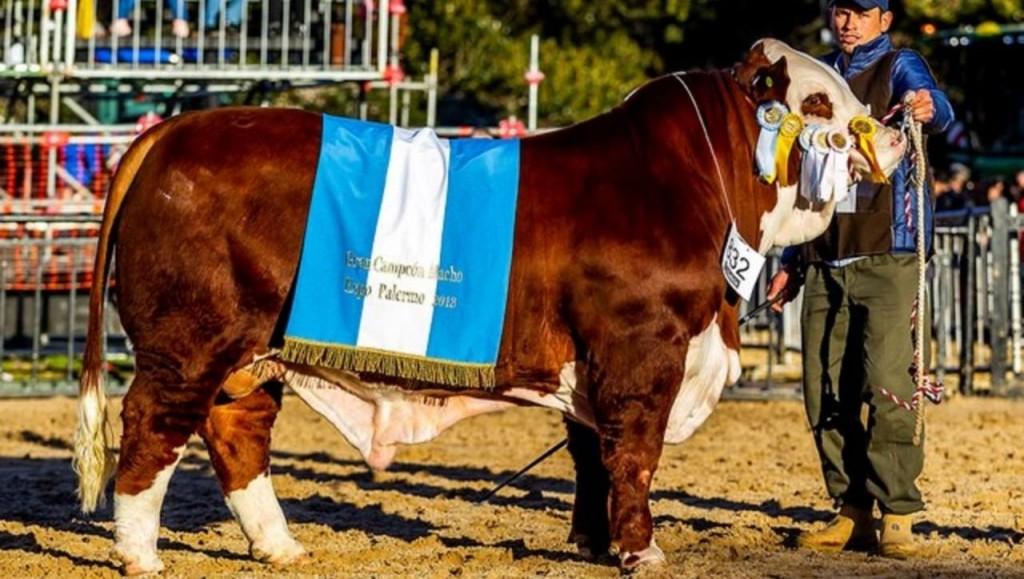 Un toro cordobés fue el Gran Campeón Macho Braford