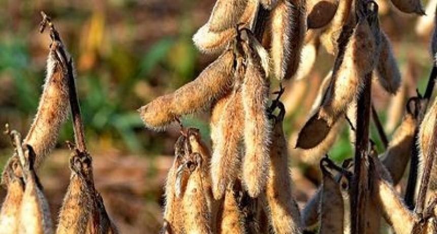 Reflejan los datos sobre carga tributaria de la cadena de la soja argentina