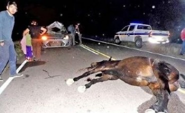 Automóvil con gente de Bell Ville chocó contra equino suelto en Villa María