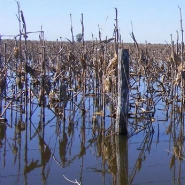 Campos bajo agua desde hace 6 meses