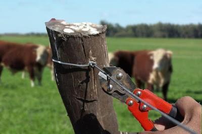 Robaron y faenaron 20 vacas en Morrison