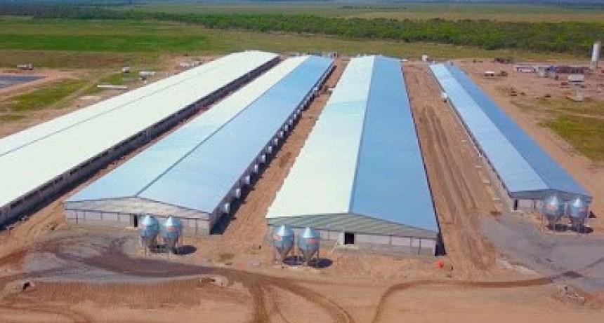 Noetinger: La granja porcina modelo será una de las más grandes del país